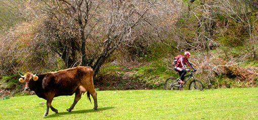 http://alberguedesabero.com/wp-content/uploads/2016/04/bicicleta-1-510x238.jpg